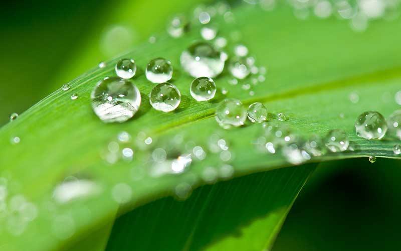 Raindrop Massage